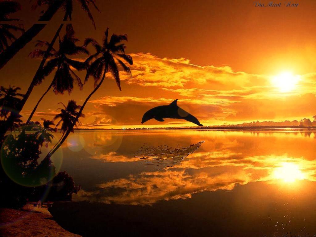 Dauphin sur couch de soleil - Fond ecran coucher de soleil sur la mer ...