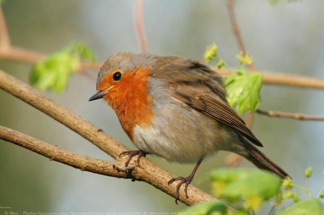 Les oiseaux Mm78v0hf